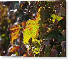 Acrylic Print featuring the photograph Fall Color 1 by Arik Baltinester