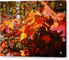 Fall Color 2 Acrylic Print by John Julio