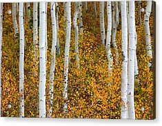 Fall Color Acrylic Print by Dori Peers