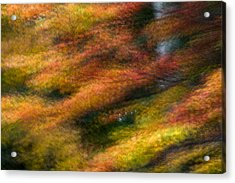Acrylic Print featuring the photograph Fall Color Impressions by Kevin Blackburn