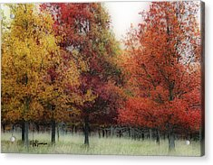 Fall Color Acrylic Print by Jeff Swanson