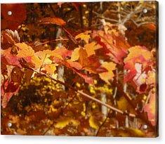 Fall Color Acrylic Print by John Julio
