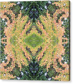 Fall Color Kaleidoscope Acrylic Print by Bill Barber