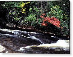 Fall Color Swallow Falls State Park Acrylic Print by Thomas R Fletcher