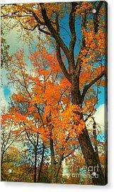 Fall Colors 2 Acrylic Print by Marjorie Imbeau