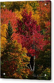 Fall Colors 8743 Acrylic Print by Dan Beauvais