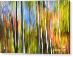 Fall Colors Abstract Acrylic Print by Elena Elisseeva