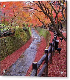 Fall Colors Along Bending River In Kyoto Acrylic Print by Jake Jung