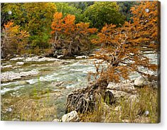 Fall Colors Along The Pedernales River Acrylic Print by Mark Weaver