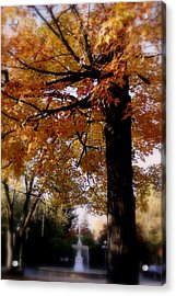Fall Colors And Fountain Acrylic Print by Martin Morehead