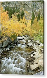 Fall Colors And Rushing Stream - Eastern Sierra California Acrylic Print by Ram Vasudev
