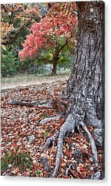 Fall Colors At Lost Maples Acrylic Print