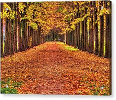 Fall Colors Avenue Acrylic Print
