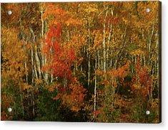 Fall Colors Grand Mesa Da Acrylic Print
