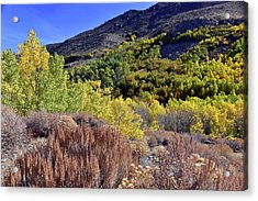 Fall Colors In Bishop Creek  Acrylic Print by Dung Ma