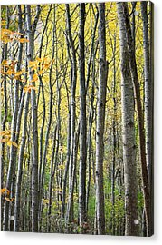 Fall Colors In Maine 2 Acrylic Print by Jonathan Hansen