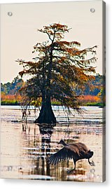 Fall Colors In The Marsh Acrylic Print by Bill Perry