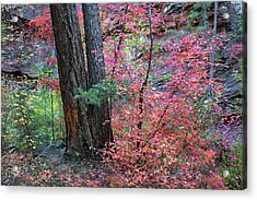 Fall Colors In West Fork Of Oak Creek Canyon Acrylic Print