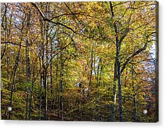 Fall Colors Of Rock Creek Park Acrylic Print