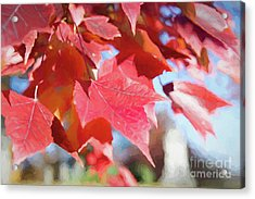 Fall Colors Oil Acrylic Print