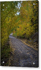 Fall Colors On Engineer Pass Acrylic Print by Michael J Bauer