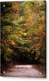 Acrylic Print featuring the photograph Fall Colors On The Trail by Shelby Young