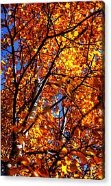 Fall Colours Acrylic Print