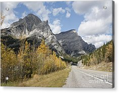 Fall Colours On Hwy #40 Kananaskis Acrylic Print