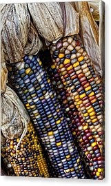 Fall Corn Acrylic Print