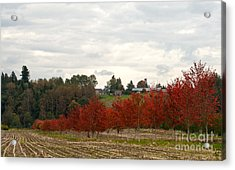 Fall Country Acrylic Print