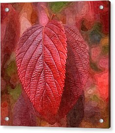 Fall Crimson Acrylic Print by Nick Kloepping