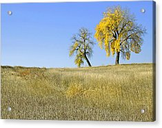 Fall Days In Fort Collins Co Acrylic Print by James Steele
