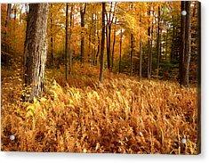 Fall Ferns Acrylic Print by Eric Foltz