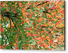Fall Festivities Acrylic Print
