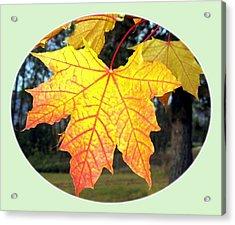 Fall Finery 1 Acrylic Print