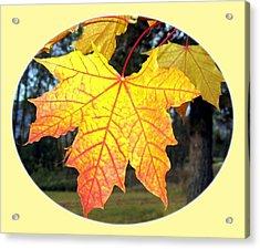 Fall Finery 2 Acrylic Print