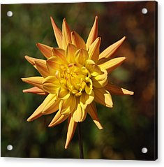 Acrylic Print featuring the photograph Fall Flower by Richard Bryce and Family