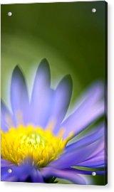 Fall Flower Acrylic Print by Silke Magino