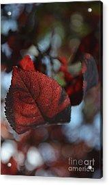 Fall Foliage 2 Acrylic Print by Eva Maria Nova