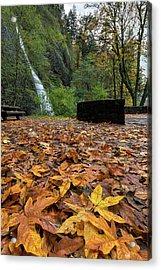 Fall Foliage At Horsetail Falls Acrylic Print by David Gn