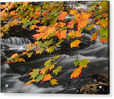 Fall Foliage In Acadia National Park  Acrylic Print by Juergen Roth