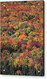 Fall Foliage In New Hampshires White Acrylic Print by Richard Nowitz