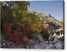Fall Foliage In The Guadalupes Acrylic Print by Melany Sarafis
