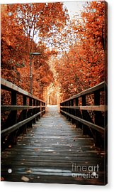 Acrylic Print featuring the photograph Fall Foliage In The Heart Of Berlin by Ivy Ho