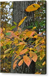 Fall Foliage Acrylic Print by JAMART Photography