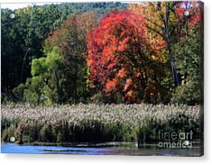 Acrylic Print featuring the photograph Fall Foliage Marsh by Smilin Eyes  Treasures