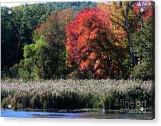 Fall Foliage Marsh Acrylic Print
