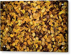 Fall Foliage Nature Pattern Acrylic Print by Frank Tschakert