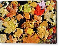 Fall Foliage On Water Acrylic Print