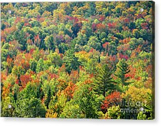 Fall Forest Acrylic Print by David Lee Thompson
